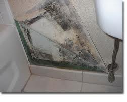 Remodeling Bathroom With Mold remodeling your bathroom: what to do if you find mold – plumber