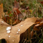 Autumn Plumbing (Knoxville Plumber)